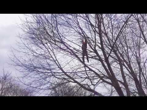 Man climbs 40 foot high tree must watch!!!!!!!