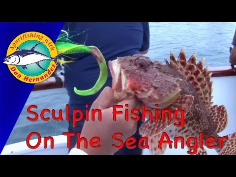 Sculpin Fishing In The Sea Angler | Sport Fishing With Dan Hernandez