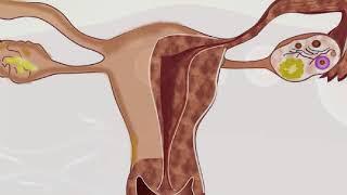 मानव प्रजनन – Part 1 – Human Reproductive System – Hindi
