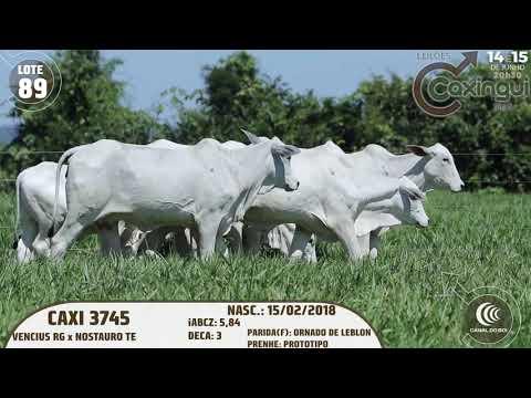 LOTE 89   CAXI 3883, CAXI 2851, CAXI 3608, CAXI 3745