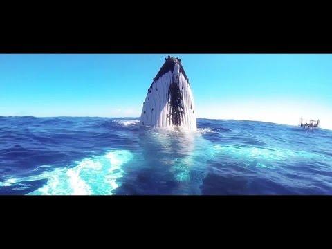 John Revox - Colombia (Official Music Video)