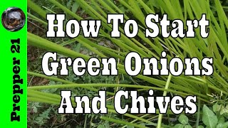 How To Grow Green Onions And Chives At Home