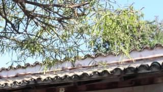 La Casa del Sol Naciente - Manuel Llano