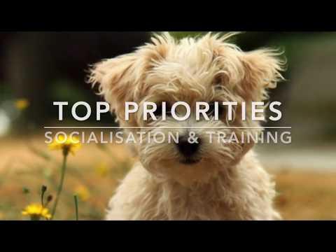Puppy Priorities - Socialisation & Training