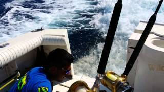 sea lion in cabo san lucas chases boat and comes aboards for a fish