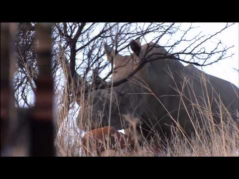 Shocking Rhino Bow Hunting