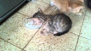 Котёнок ест творог