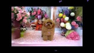 今すぐ購入!YouLongオンラインサイト。 http://www.teddybearmommy.com...