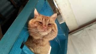 Кот Тихон на даче