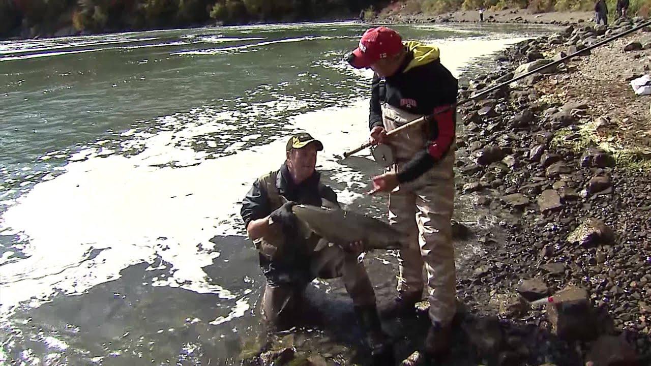 Chinook salmon river fishing niagara whirlpool niagara for Falls lake fishing report