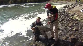 Chinook salmon river fishing, Niagara Whirlpool, Niagara River, ON