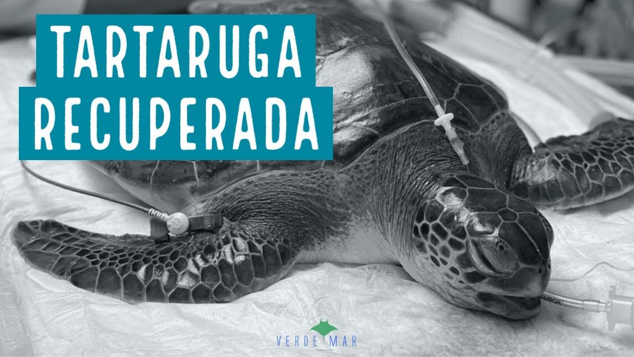 Soltura de tartaruga verde em Itaipu, Niterói/RJ