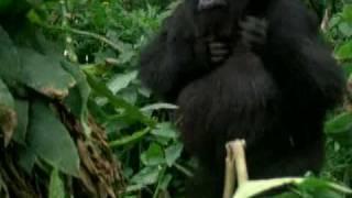 Fabrizio De Andrè - Il Gorilla