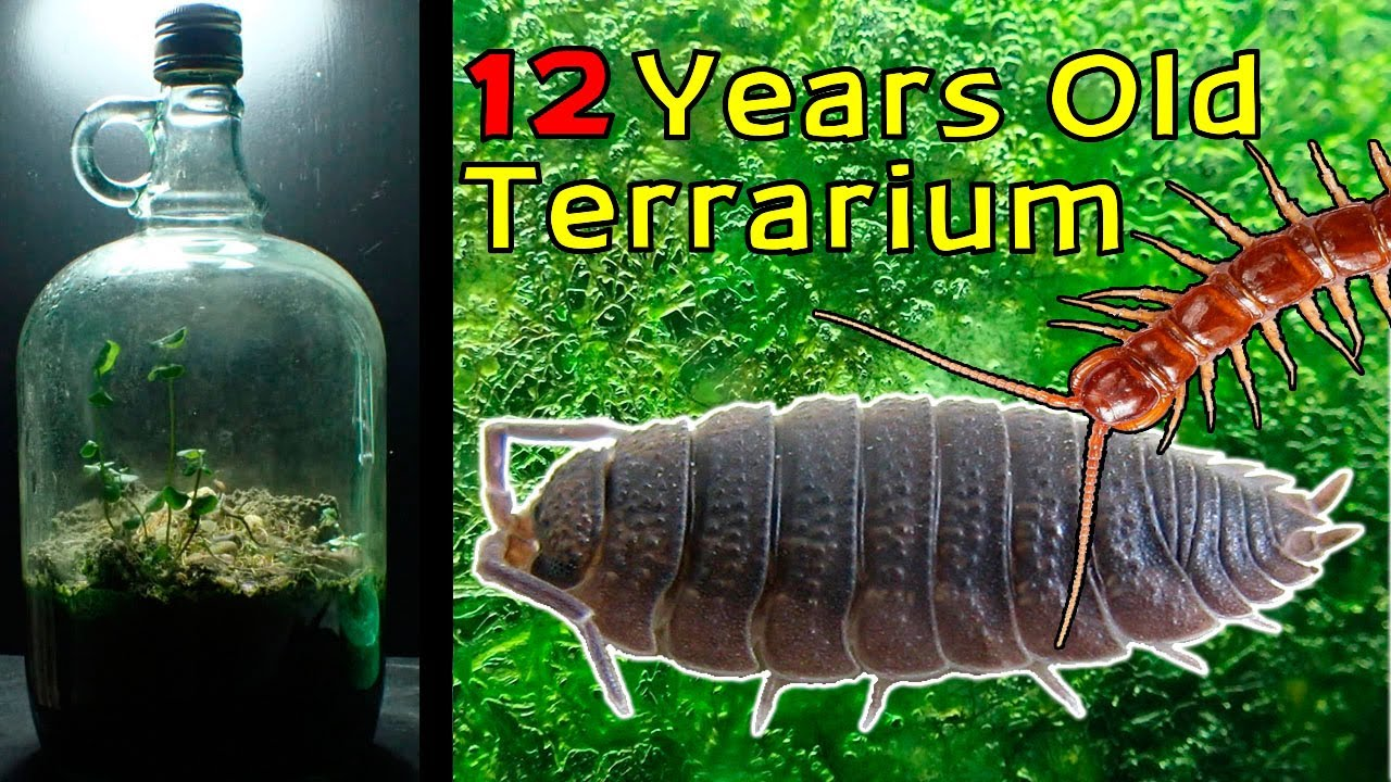Download 12 Year Old Terrarium - Life Inside a closed jar, Over a decade in isolation