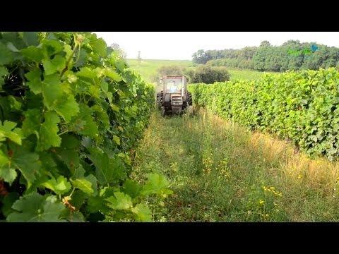 Sol enherbé, sol vivant - itinéraires culturaux d'un vigneron bio