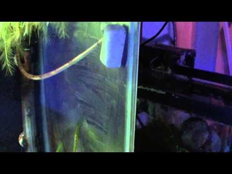 Nualgi Freshwater Update 55g, 50g, 20g