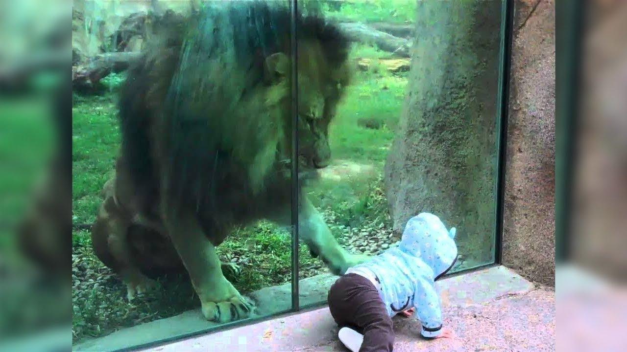 Hayvanat Bahçelerinde Yaşanmış En Korkutucu Gerçekler