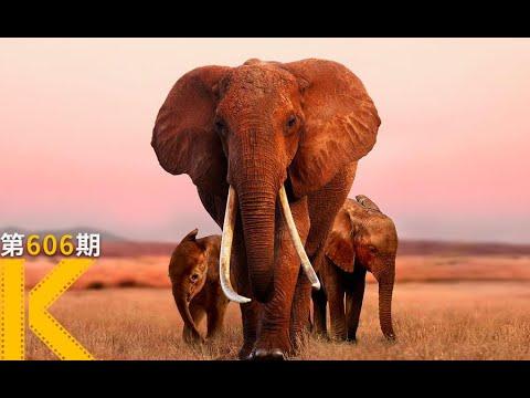 【看电影了没】无数人打出满分的纪录片,笑着笑着就看哭了《大象女王》