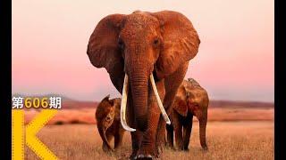 【看电影了没】无数人打出满分的纪录片,笑着笑着就看哭了《大象女王》|紀錄片|歐美電影