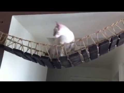 Indiana Jones Cat Youtube