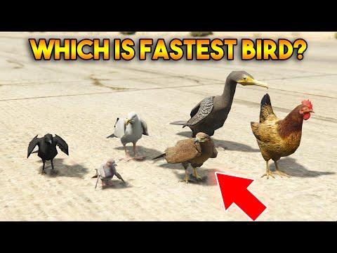 GTA 5 ONLINE : WHICH IS FASTEST BIRD?