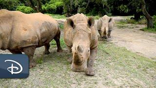 Big News for Disney's Animal Kingdom on World Rhino Day