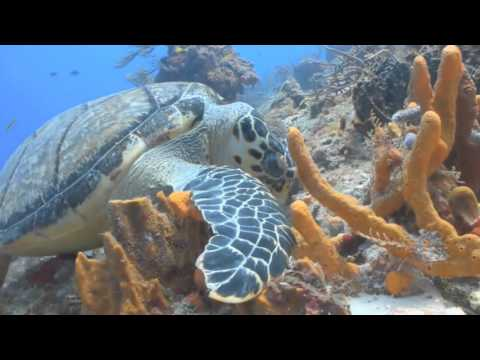Coral Reef Video Up to 4K