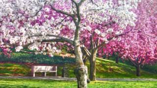 Hiroshima - Love and Understanding