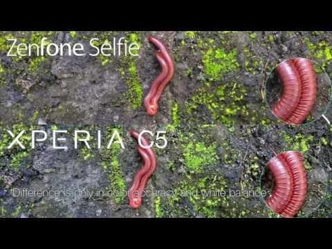 Asus Zenfone Selfie vs Sony Xperia C5 Ultra Comparison - Benchmark, Camera, Speed Test