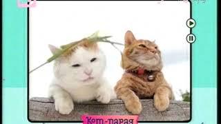 Кот-парад. Выпуски 11 и 7. 27.10.2013 (с рекламой)