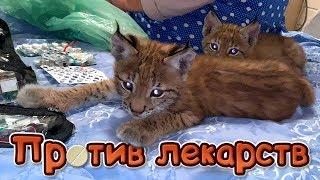 РЫСЯТА ПРОТИВ ЛЕКАРСТВ / Утро с котами и котятами