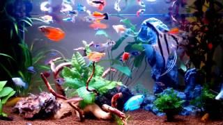 """Rybki akwariowe w sklepie zoologicznym """"Discus"""""""