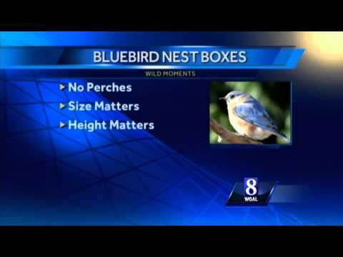 How do you keep sparrows out of your birdhouse?