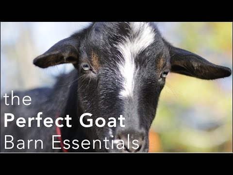 The Perfect Goat Barn Setup What You Need To Make