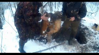 Охота на лису с ягдтерьером и фокстерьером