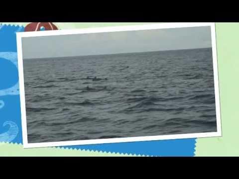 Maldives Wildlife Video