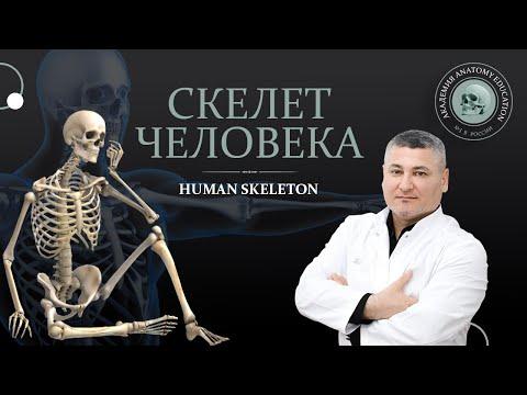 Видеоуроки анатомия человека кости