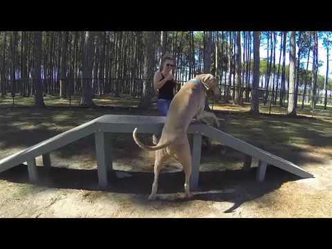 Dog Trick Fail