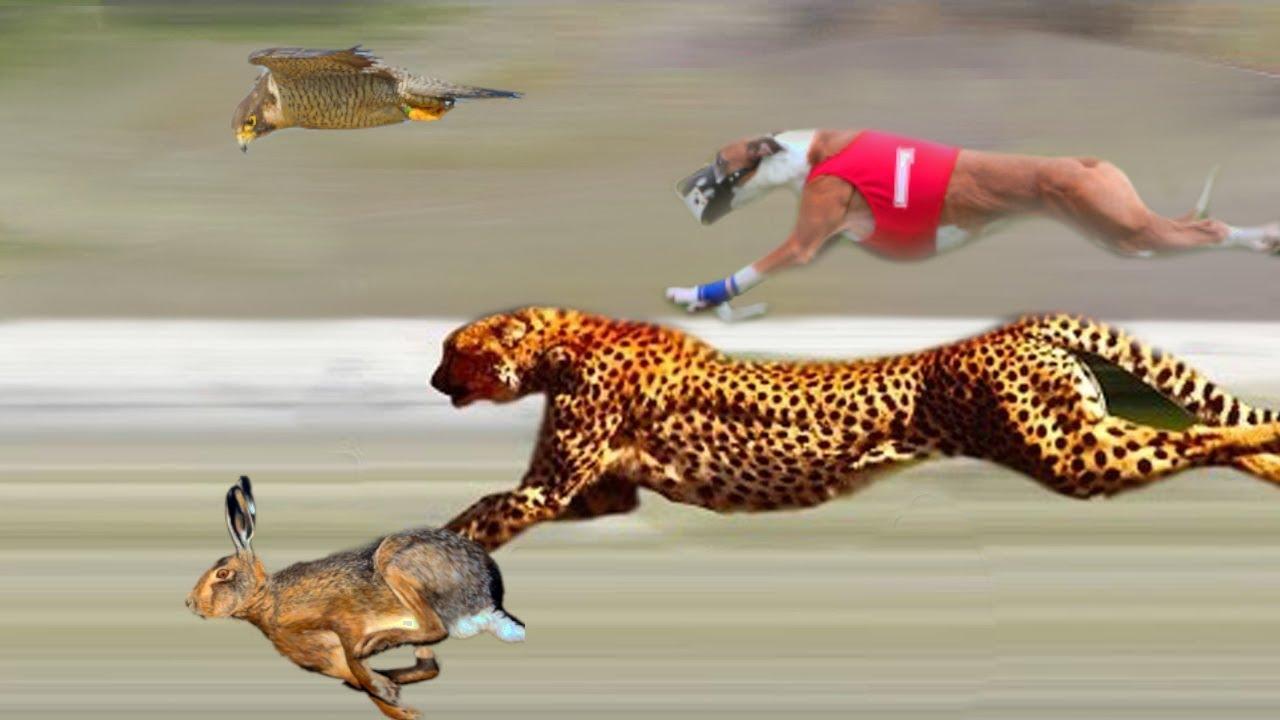 أسرع 10 حيوانات على وجه الأرض Youtube