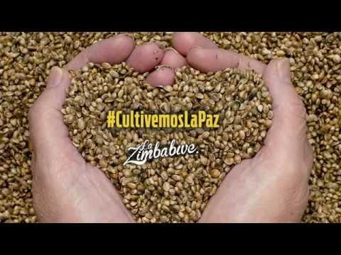 La Zimbabwe Feat. Yataians - Cultivemos La Paz  (Radio Version)
