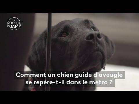 Le Meilleur Du Monde De Jamy – Comment Un Chien Guide D'aveugle Se Repère Dans Le Métro ?