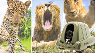 Mauled by Lions, Trampled by Elephants, Stolen by Cubs: 10 Years of Adventures with BeetleCam