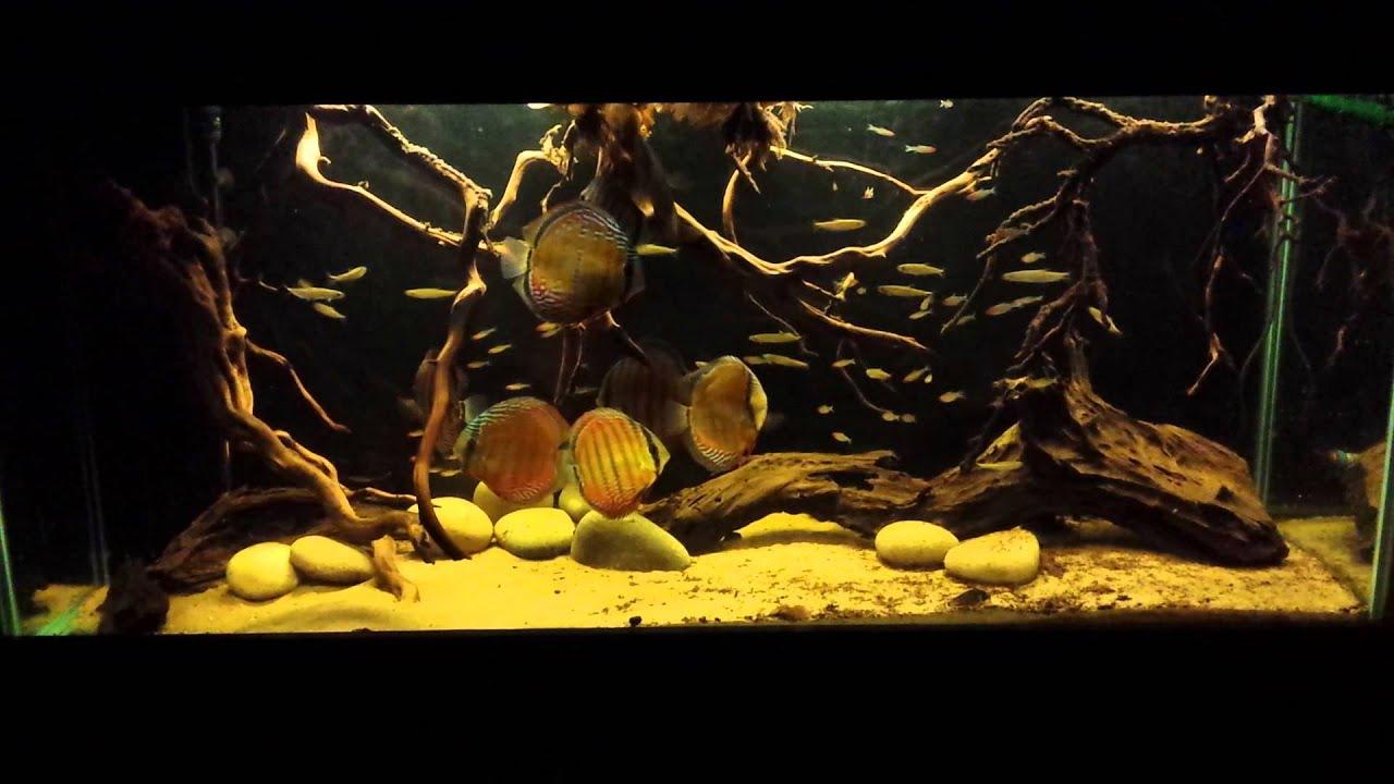 Lago Nhamundá Wild Discus Biotope Aquarium