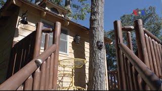 Người Mỹ với thú vui xây nhà trên cây