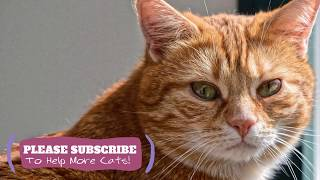 2 Hours  Soothing Music for Cats! Help Your Cat Anxious or Restless with Music ☯LCZ109