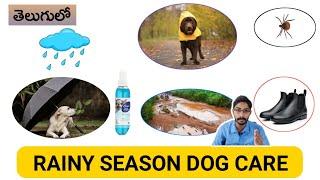 Rainy Season Dog Care Tips in Telugu   పెంపుడు కుక్కలకు వర్షాకాలంలో ఏ జాగ్రత్తలు పాటించాలి?  