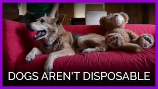 Couple Abandons Furry Friend