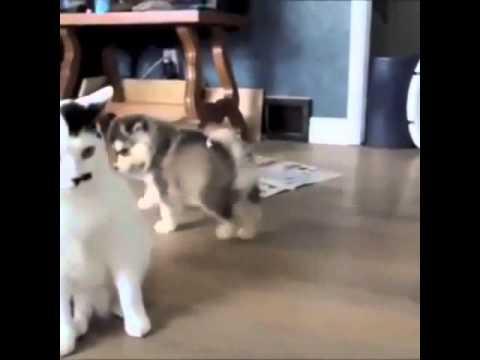 cute & funny animals vine compilation