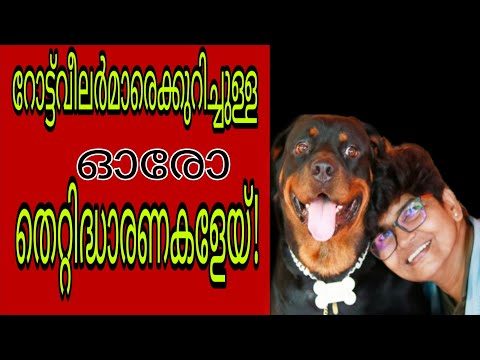 Top 10 Misconceptions about Rottweilers | Rottweiler Facts | Nandas Pets&Us | Vanaja Subash