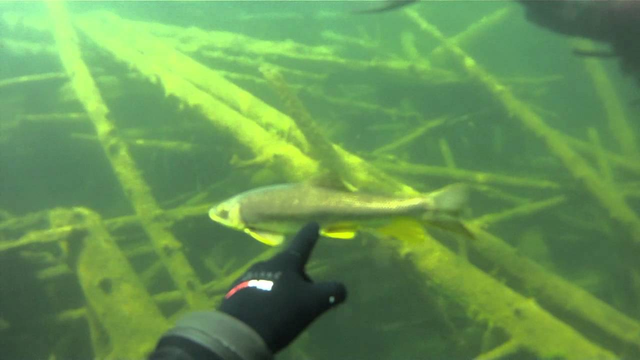 Diving Coopers Lake In Nw Montana Youtube